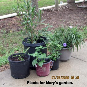 Plants for Mary's garden