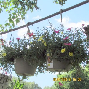 Hanging baskets against sky line