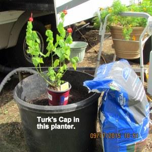 Turk's Cap September 2015