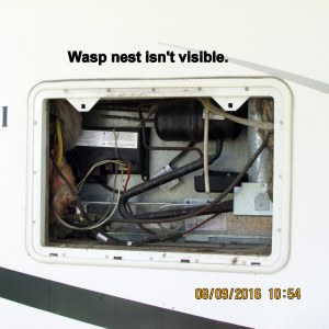 No wasp nest visible