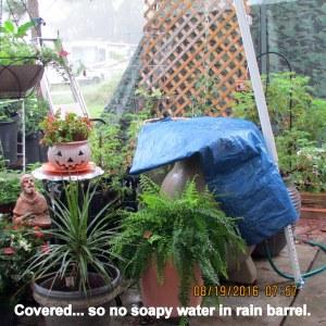 Covered rain barrel