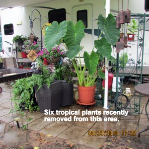 Area vacated by tropical plants