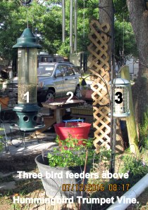 Three bird feeders