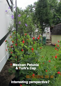 Hugging the trailer picture of Turk's Cap