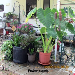 Fewer plants