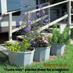 Planters in Nedra's yard