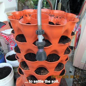 Hose water to settle soil