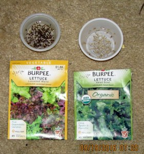 Soaking lettuce seed