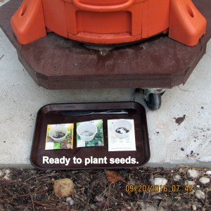 Ready to plant seeds