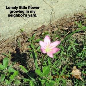 Little flower in Rae's yard
