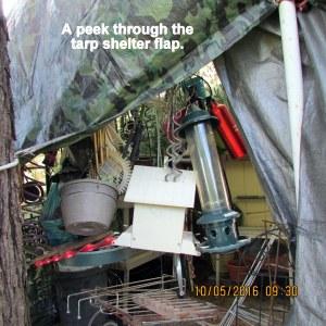 A peek through tarp shelter flap