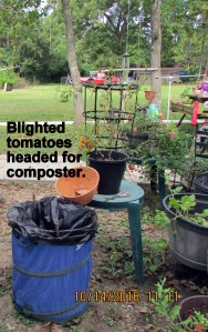 Blighted tomatoes to composter, plant went into the trash