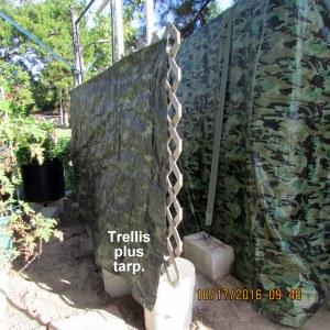 Trellis plus tarp