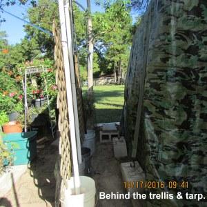 Behind trellis and tarp