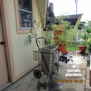 Pepper and tomato planters
