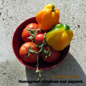 Homegrown tomatoes and peppers