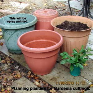 Planters for gardenia cuttings