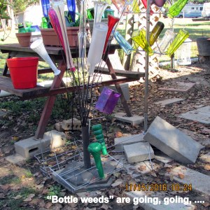 Removed bottle weeds