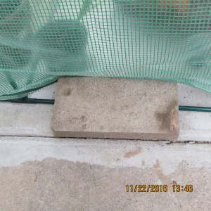 Cement block on north side of greenhouse