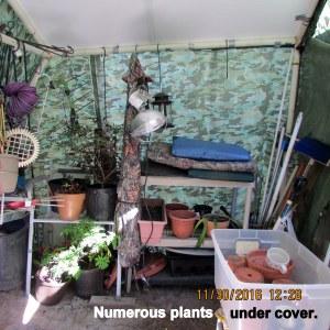 Numerous plants under cover