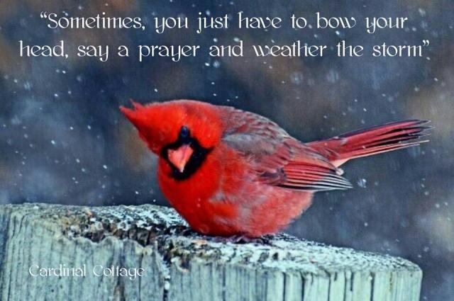 cardinal-praying-poster