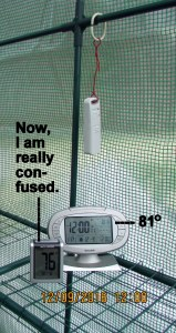 Temperature in greenhouse at twelve noon