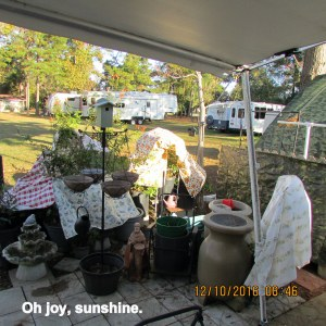 Sunshine beyond my patio