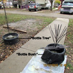 Bottle tree and bottle bush
