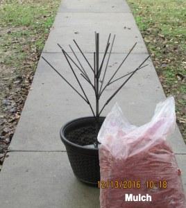 Mulch covering base of bottle bush