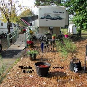 Bottle bush in neighbor's yard