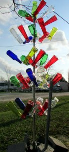 Late afternoon sunshine on bottle tree (2)