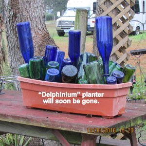 Delphinium planter will be gone