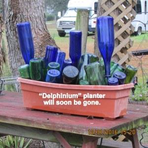 Delphinium planter will be gone