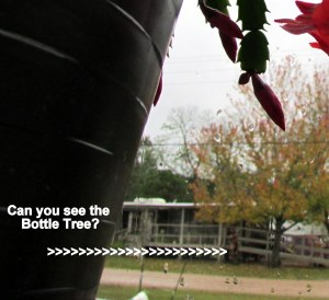 Can you see the Bottle Tree