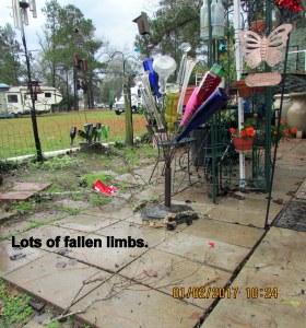 Lots of fallen limbs