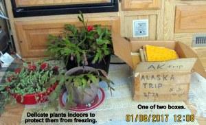 Box of Alaska trip memorabilia