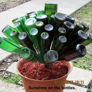 Sunshine on the bottles