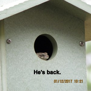 Frog in bird house close up