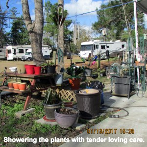 Showering the plants with TLC
