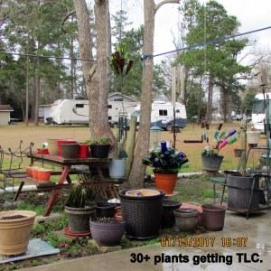 Thirty plus plants getting TLC