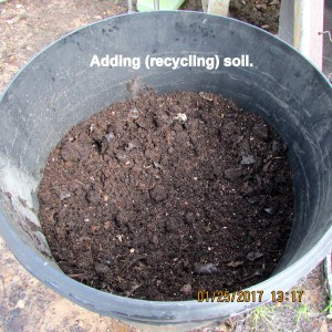 Adding recycled soil