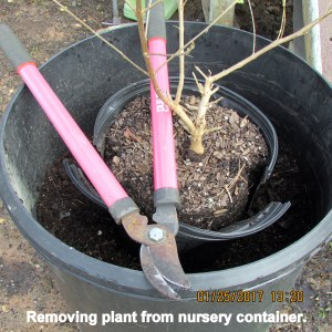 Removing from nursery container