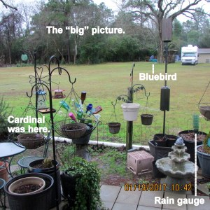 Bird feeders, the big picture