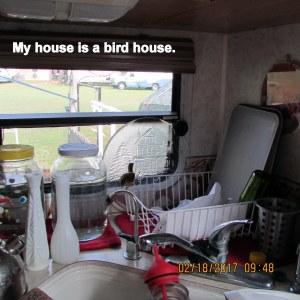 My house is a bird house