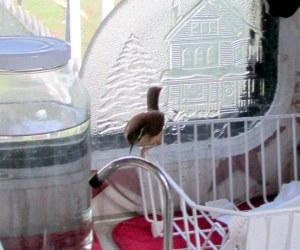 Bird in my kitchen