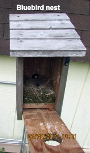Closeup of Bluebird house