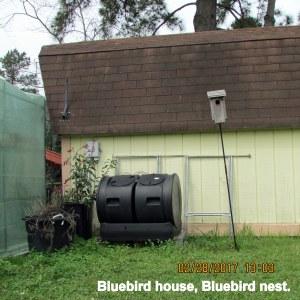 Bluebird house, Bluebird nest